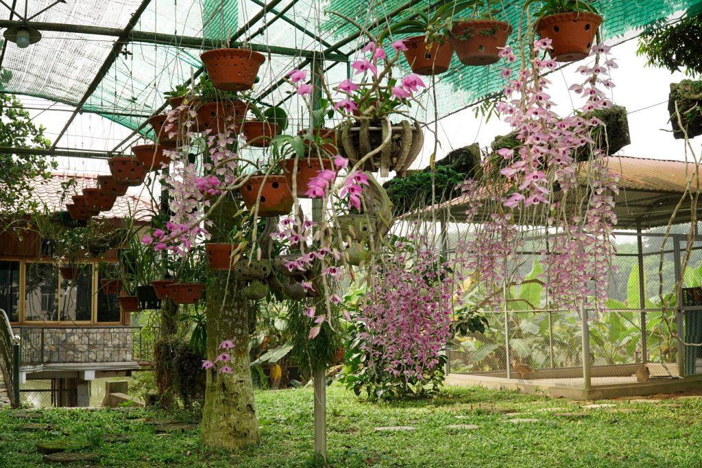 phân bón cho lan vào mùa xuân