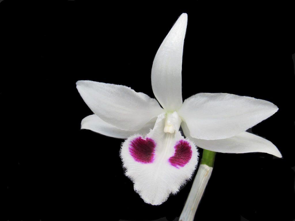mặt hoa 5ct phù mỹ